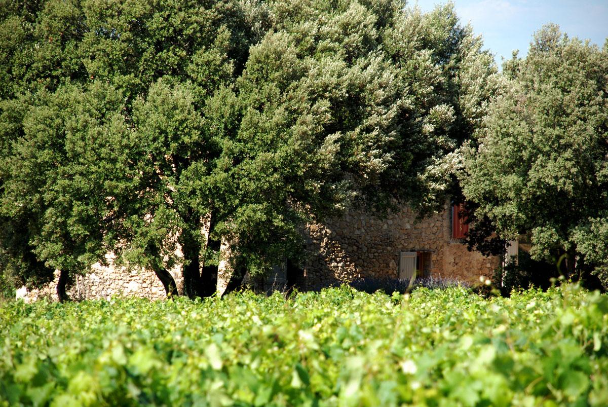 Mariage-champêtre-au-Domaine-Les-Perpetus