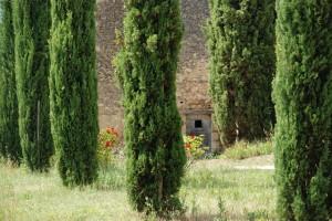 Tourisme dans le Luberon au Domaine Les Perpetus
