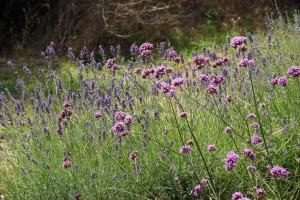 Une famille de vignerons en Provence - Domaine Les Perpetus