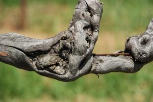 Vignoble AOP Luberon - Domaine Les Perpetus (2)