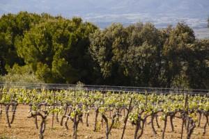 Vignoble en Provence - Domaine Les Perpetus 1