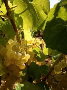 Vignoble en Provence - Domaine Les Perpetus 2