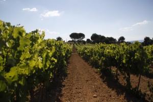 Vignoble en Provence - Domaine les Perpetus