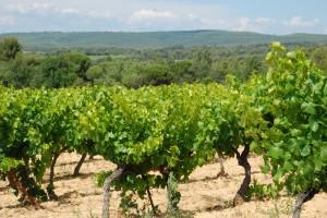 Vins AOP Luberon du Domaine Les Perpetus (3)